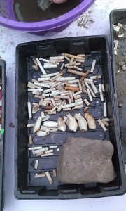 Finds tray
